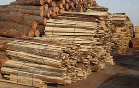 Costeros de pino